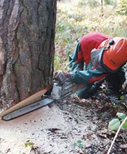 Achat bois sur pied en auvergne n goce de grumes - Coupe de bois de chauffage sur pied a vendre ...