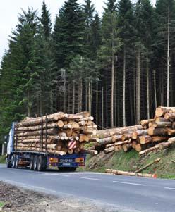 achat bois sur pied en auvergne n goce de grumes estimation parcelles bois es. Black Bedroom Furniture Sets. Home Design Ideas